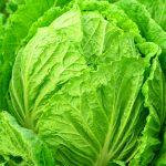 白菜の黒い点は何?栄養価や効果効能と長持ちさせる保存方法も