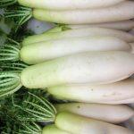大根の栄養価は加熱で減少する?効能や保存期間についても
