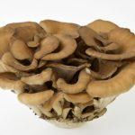 舞茸の栄養成分と効果的な食べ方は?保存方法は常温なのか冷蔵なのかも