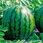 スイカの栄養素と効能は?野菜なのか果物なのかと皮や種についても