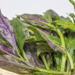 金時草の味と茎の食べ方は?茹で方と効能とおすすめレシピも紹介!