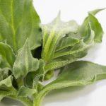 アイスプラントの味と旬の時期はいつ?食べ方や洗い方について